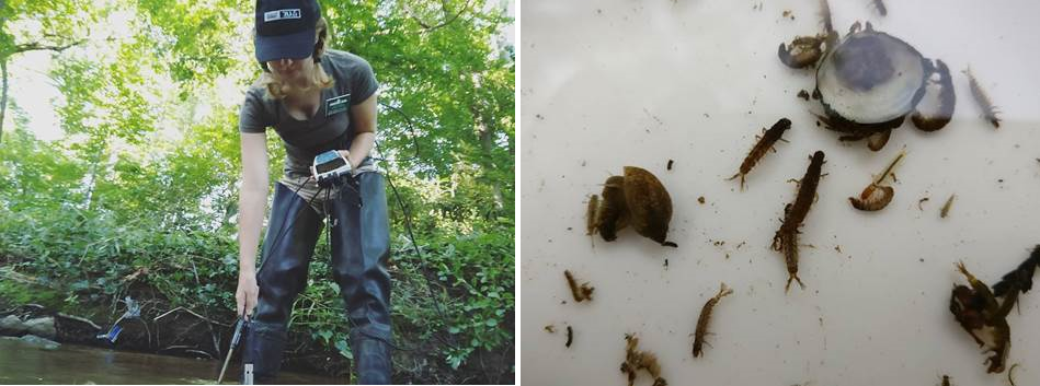 Devon Scanlan tests water and displays macroinvertebrate specimens found.