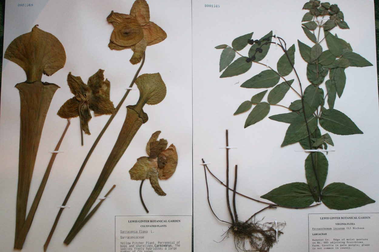 Native plant specimens
