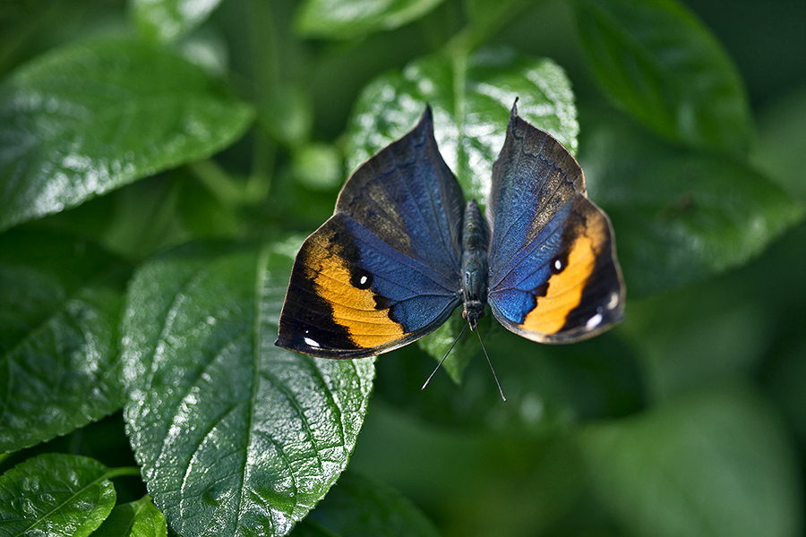 blue and orange colored butterfly