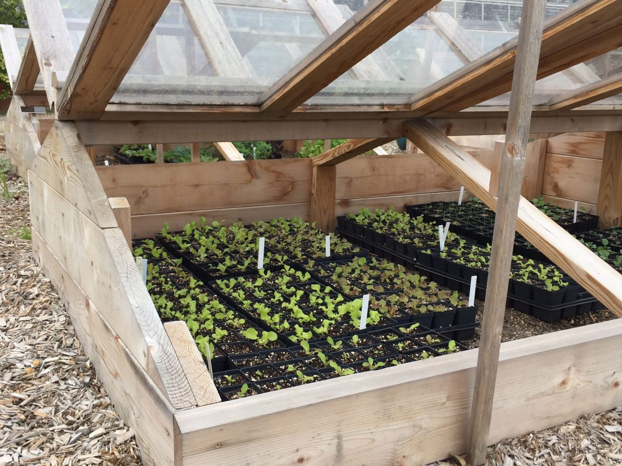 Growing Food for Those in Need - Lewis Ginter Botanical Garden