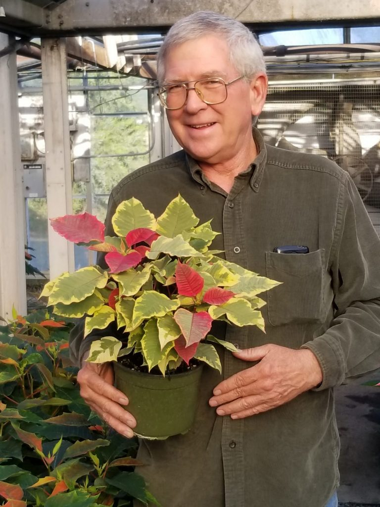 A professional grower holds a poinsettia in the greenhouse