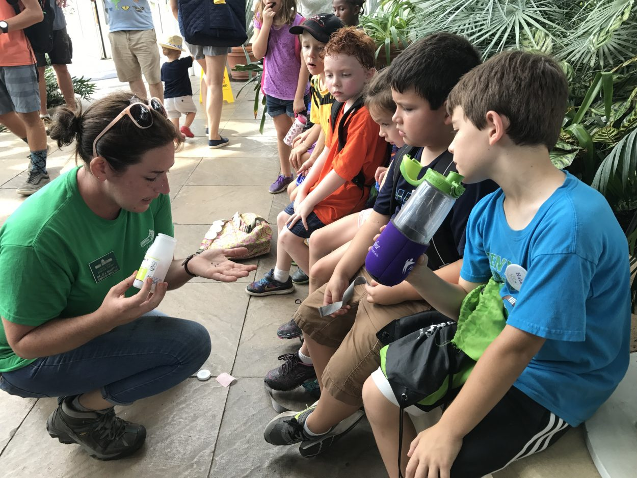 beneficial insects come in a shipment through the mail. Campers from our summer programs like to help distribute them.