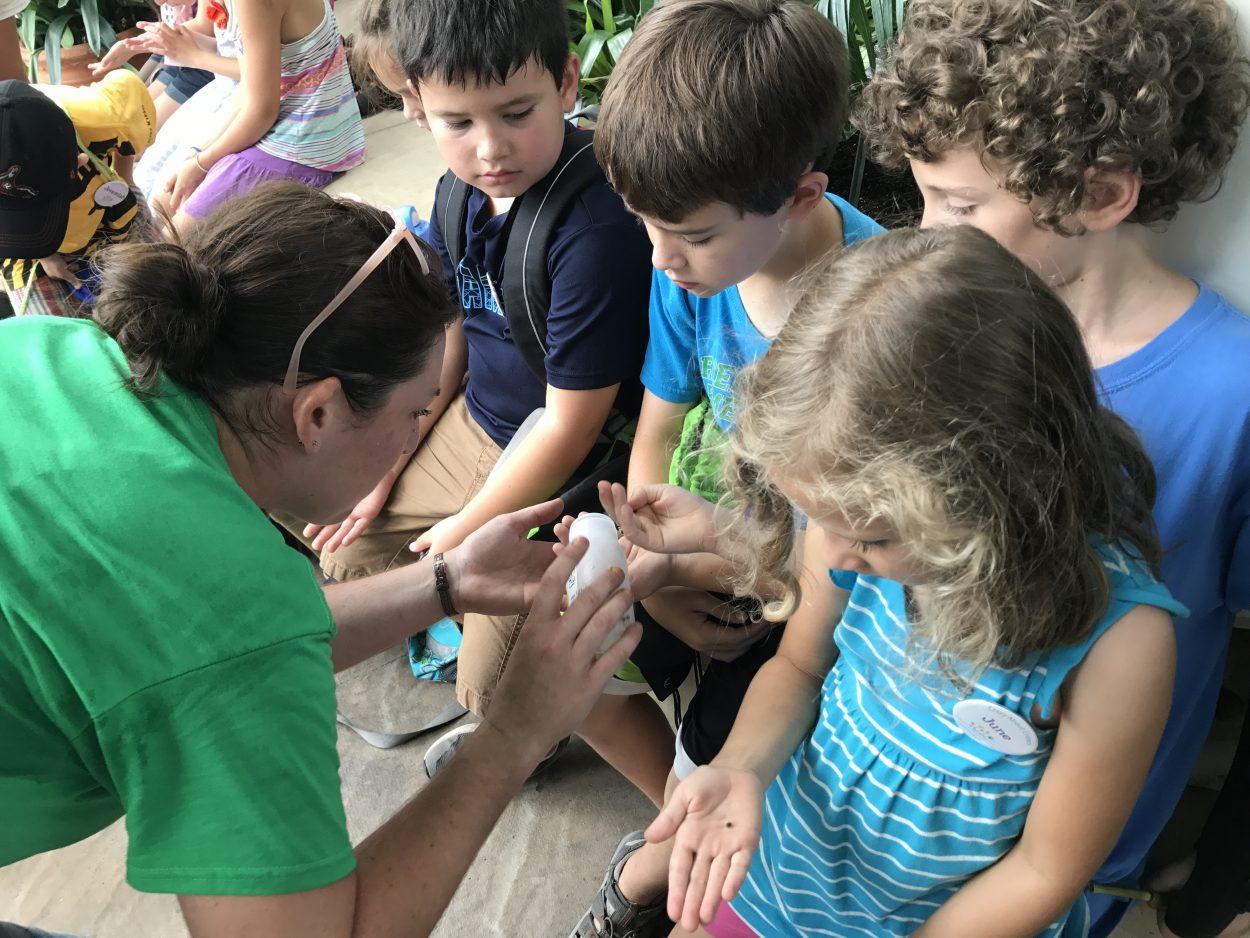 Kids gathered around a shipment of bugs