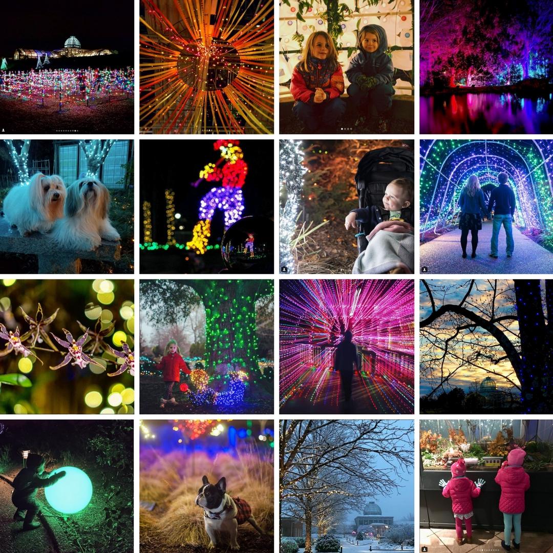 GardenFest Instagram Contest