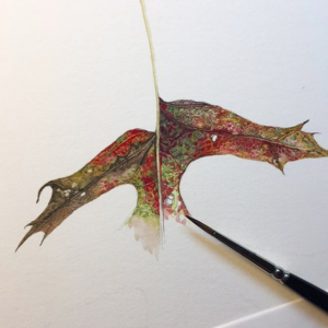 Gastinger art -- a watercolor of a leaf with brown, green and red