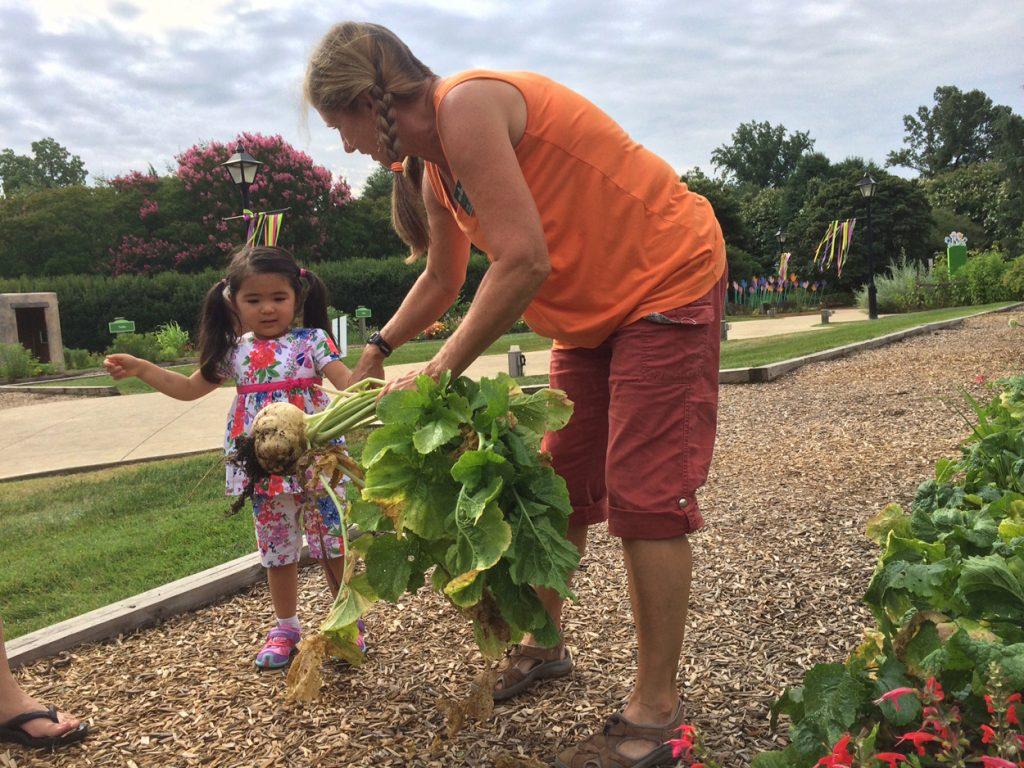 child picking giant turnip
