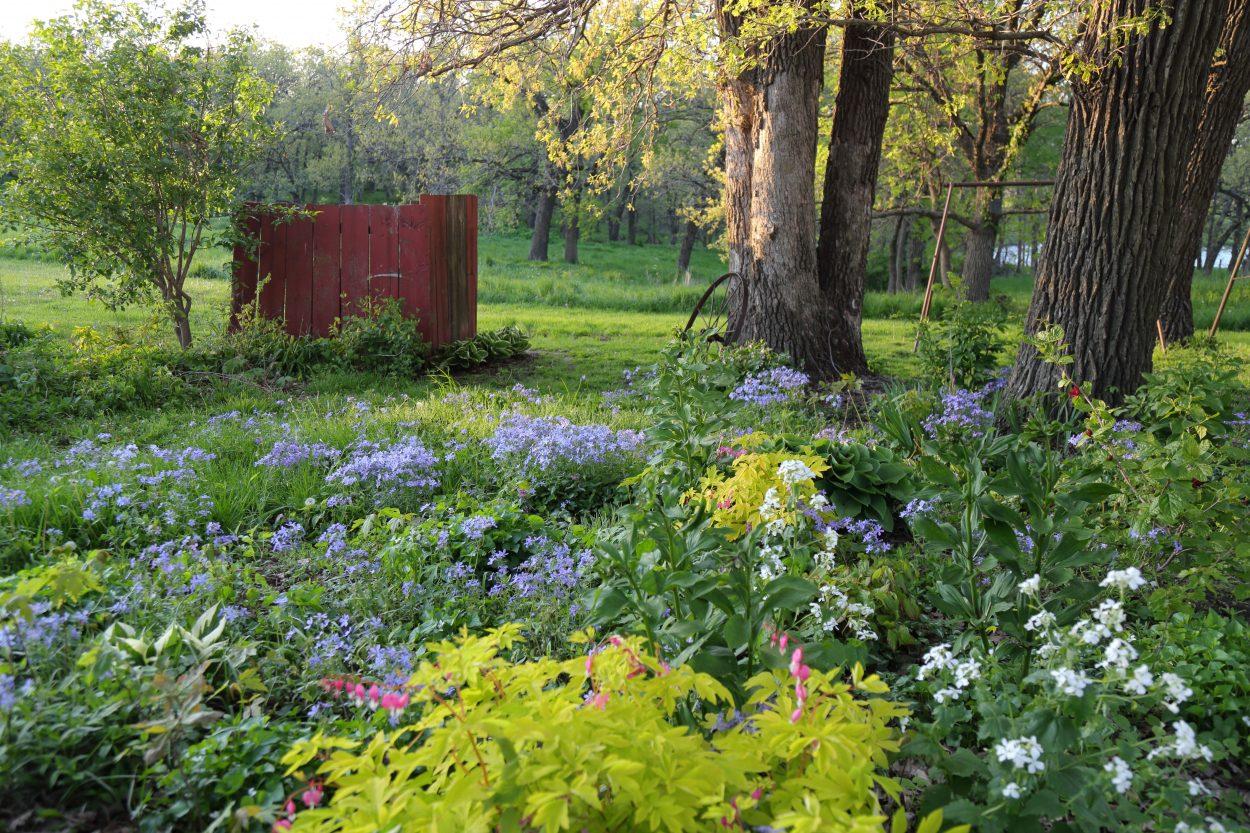 Garden of perennial groundcovers