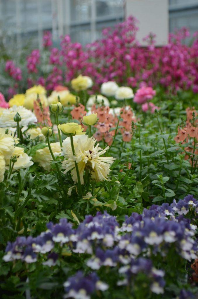 Spring PlantFest
