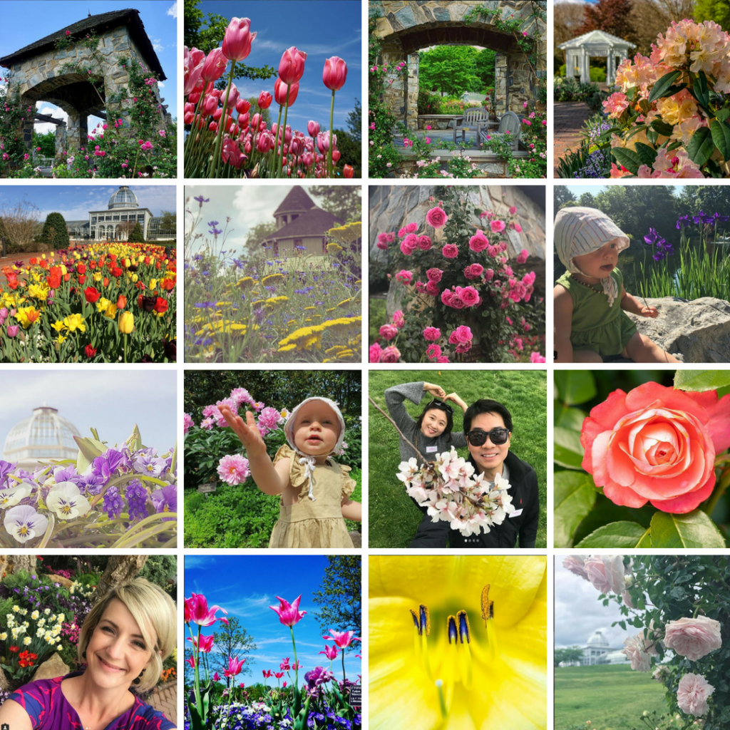 Collage of #MillionBlooms Contest submissions