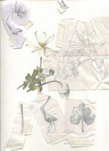 Composition for Botanical Illustration