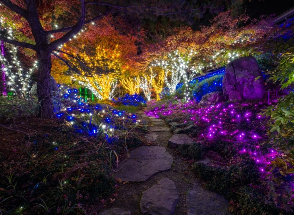 Asian Valley during Dominion Energy GardenFest of Lights. Image by Harlow Chandler