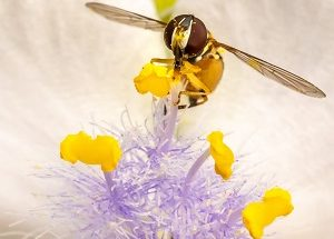 Pampering Pollinators Walk