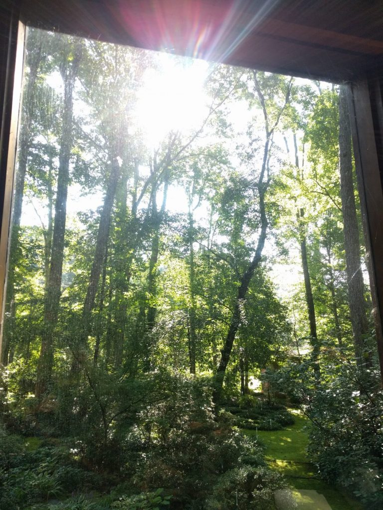Image of a broad yard of trees and moss trails framed by a window frame. At the top of the image, the sun beams, reflecting through the glass.