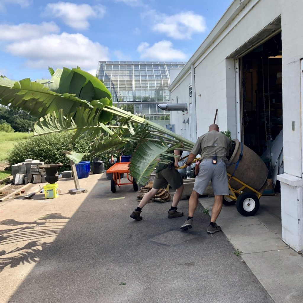 Staff moving a large planter before the hurricane