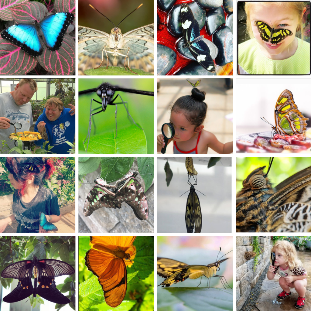 the finalists in the #Bflies instagram contest for 2018