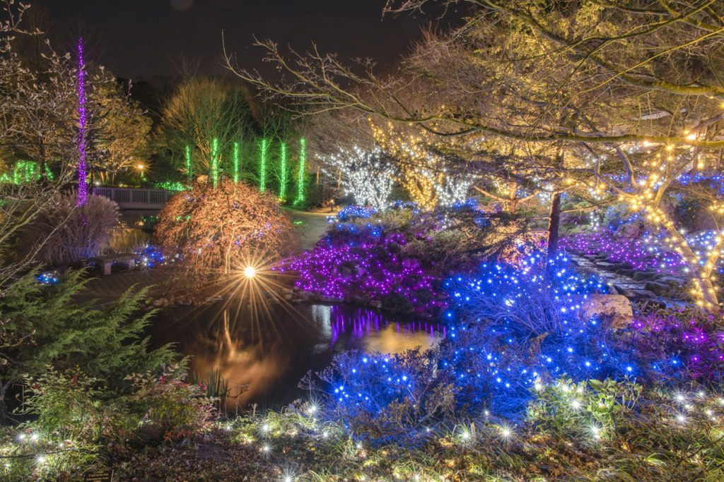 Natural area featuring holiday lights at Dominion Energy GardenFest of Lights, the perfect backdrop to your office christmas party Image by Don Williamson.