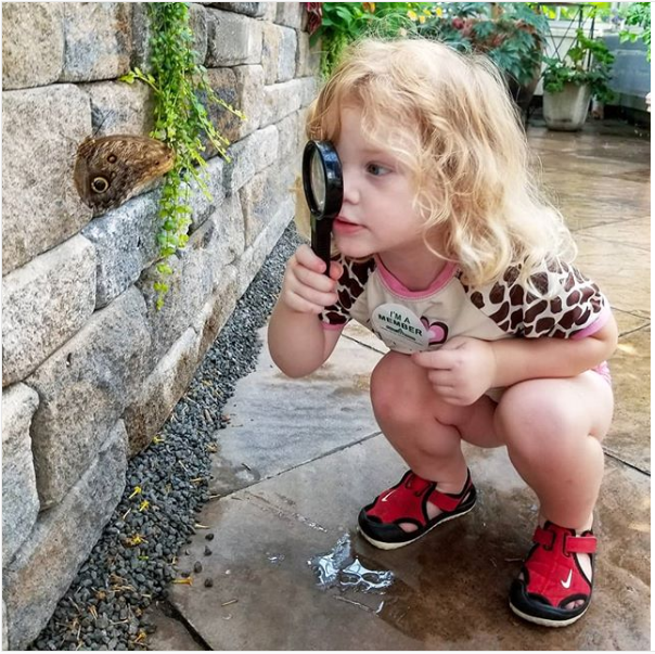 Girl looking at a butterfly at M&T Bank Butterflies live