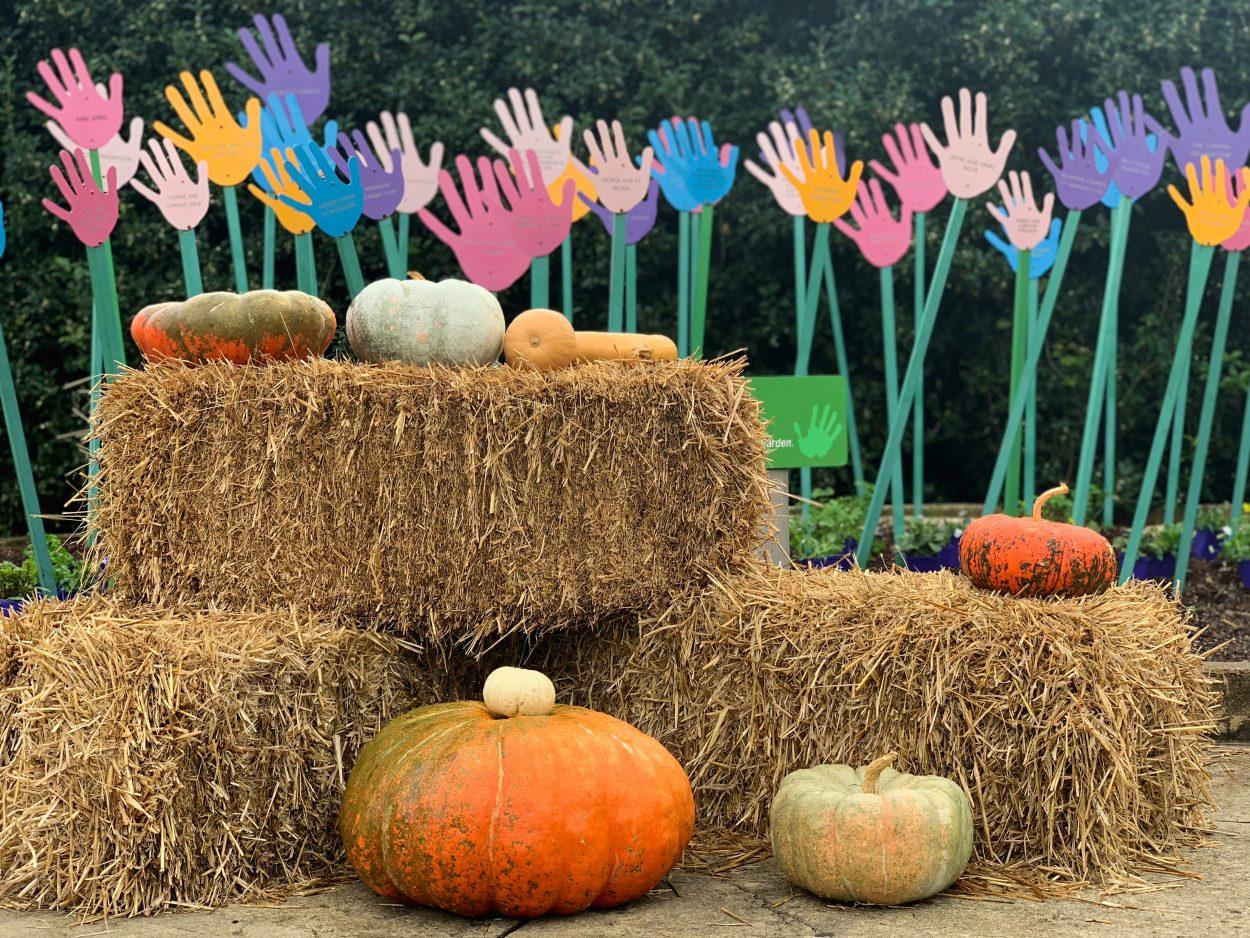 pumpkins in a harvest festival scene