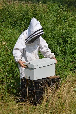 Beekeeping Refresher