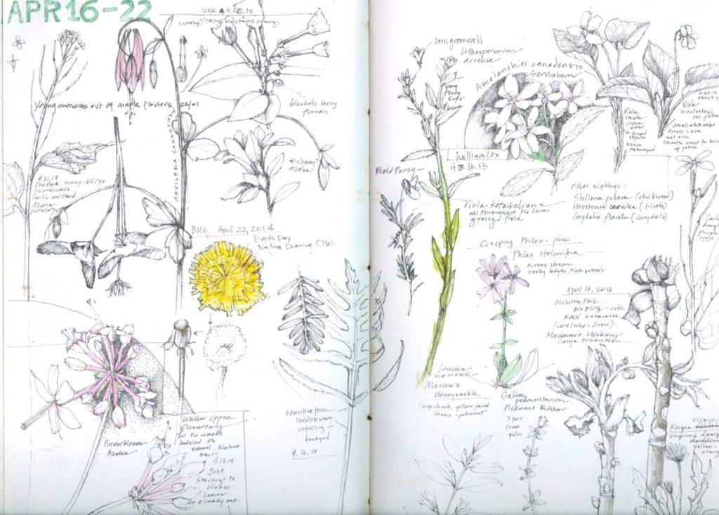 Pen & ink botanical illustration by Lara Call Gastinger