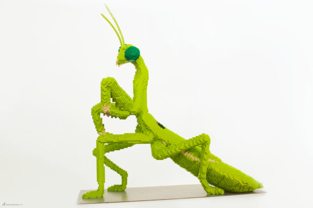 praying mantis Image by Sean Kenney