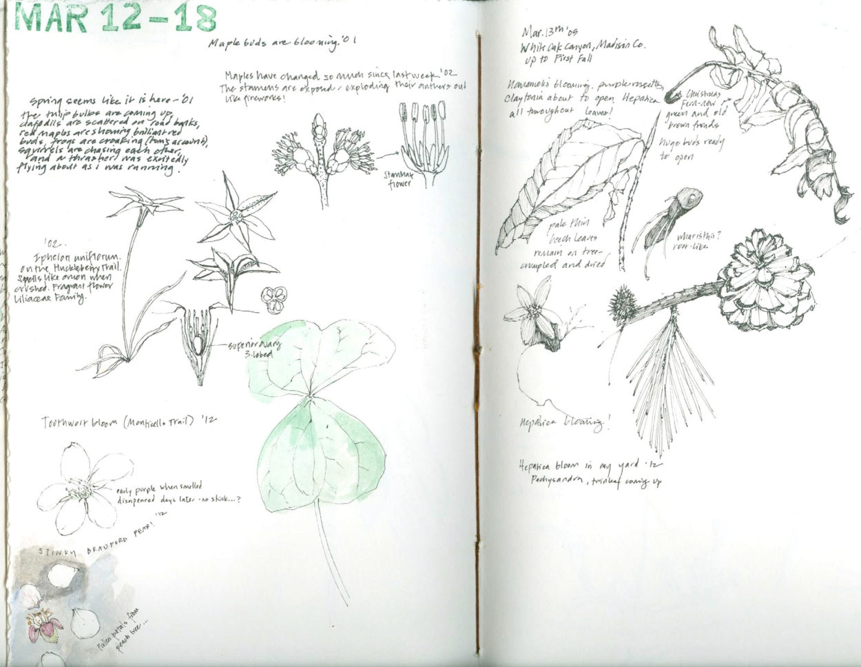 journal with notes and drawings