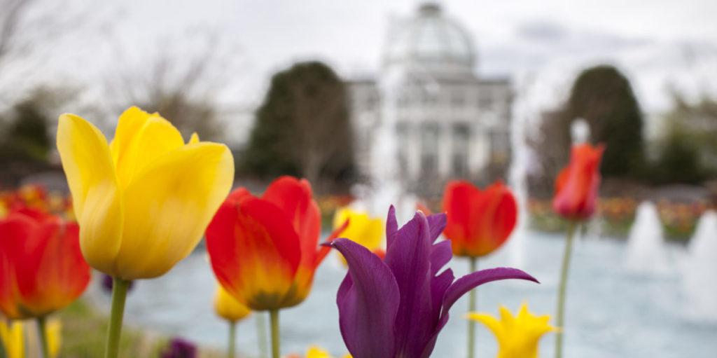 Blooms at Lewis Ginter