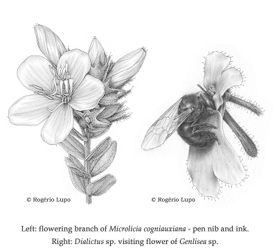 Rogerio Lupo Scientific Illustration