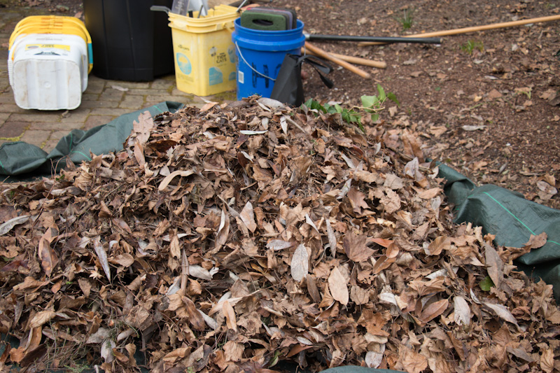 Pile of leaves in the Garden.