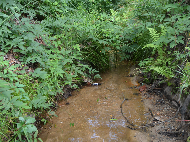 The Glen Stream Restoration project will transform a stream near the Garden's entrance into a gully.