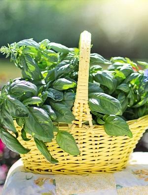 Summer Herb Garden Basics Growing