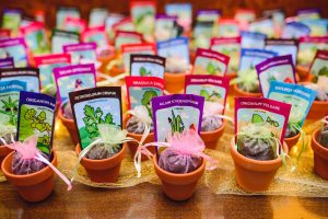 Small flower pots with seeds on a table for green, eco-friendly favors.