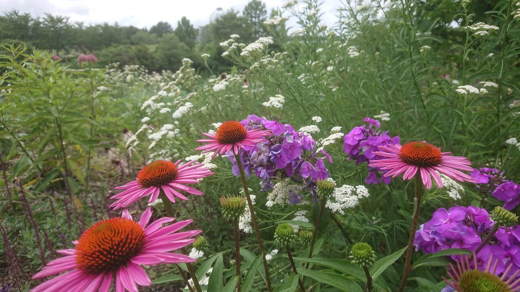 Variety of Virginia native plants in a field that help protect the Chesapeake Bay.