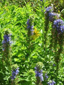 Native Plants Walk and Talk