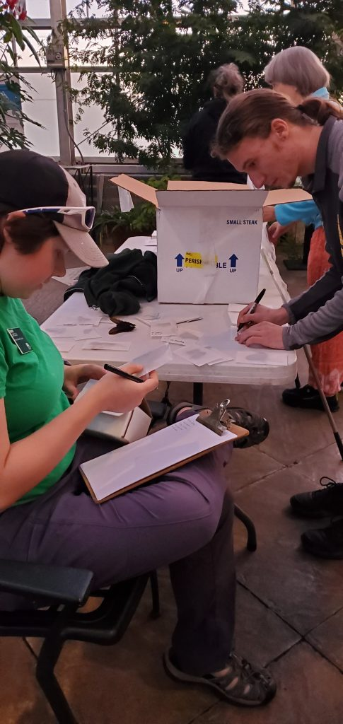 Labeling butterflies to get them ready to ship to Tucson Botanical Gardens.