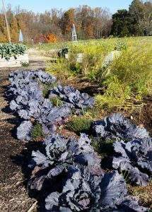 Planning and Planting a Kitchen Garden
