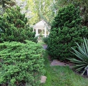 Explore Conifers at the Garden