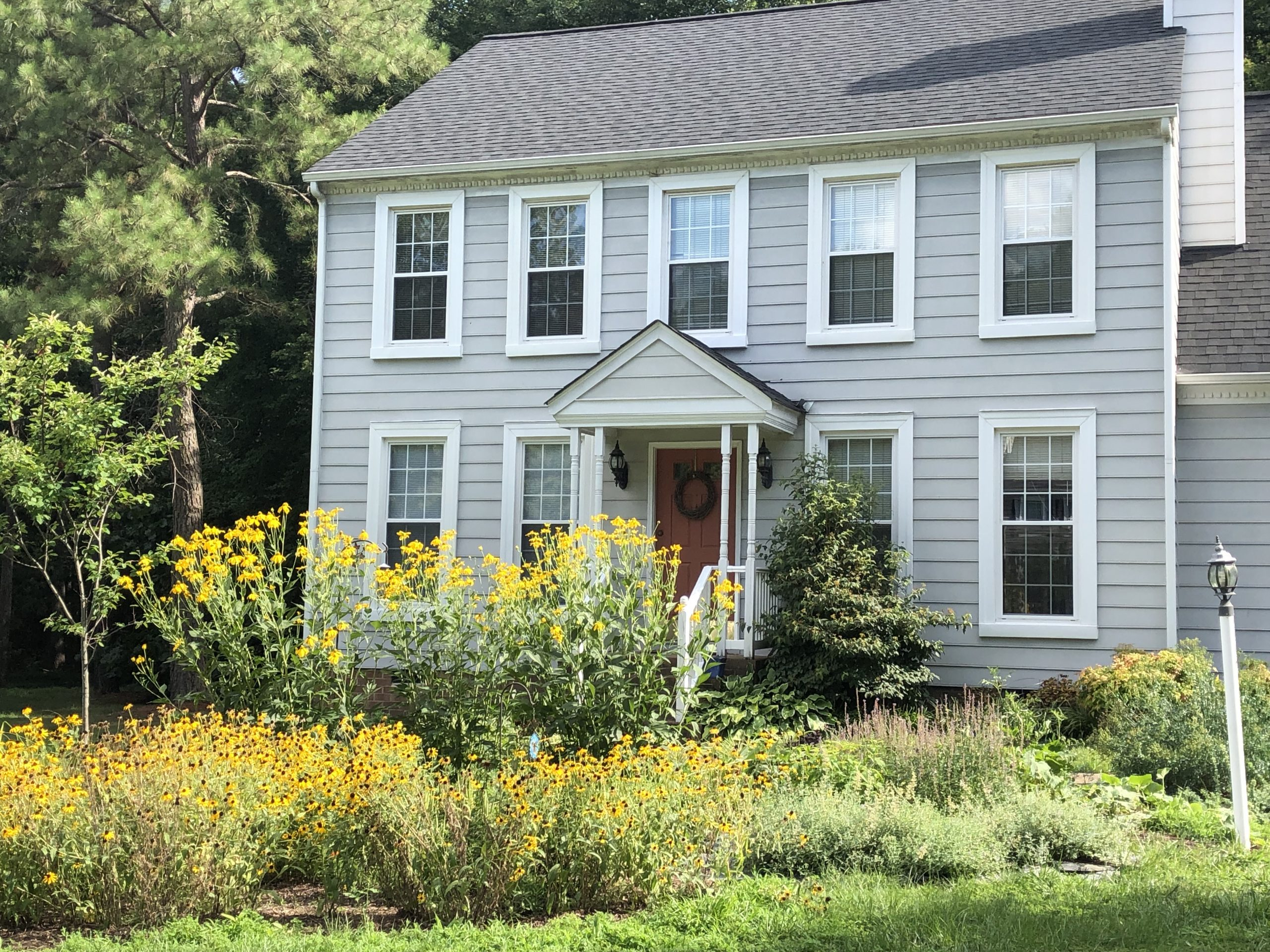 Front yard in July with Rudbeckia maxima blooming
