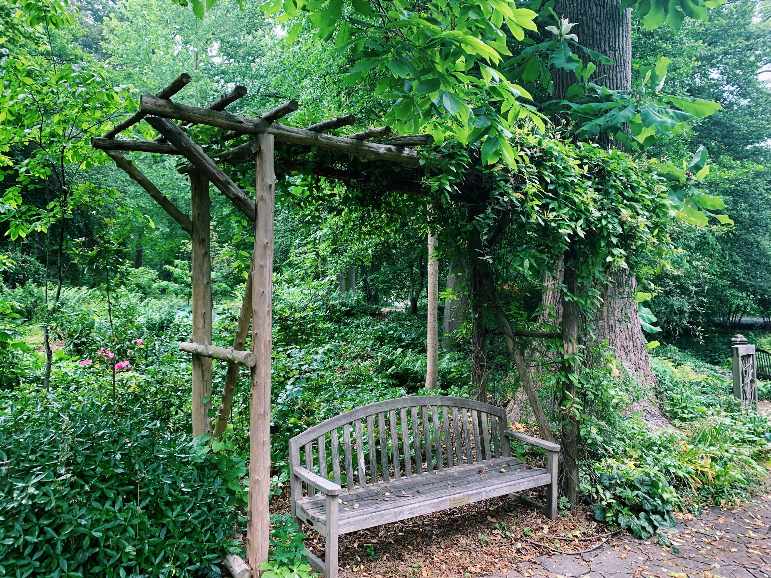 A bench in the lush green of Dot's Garden