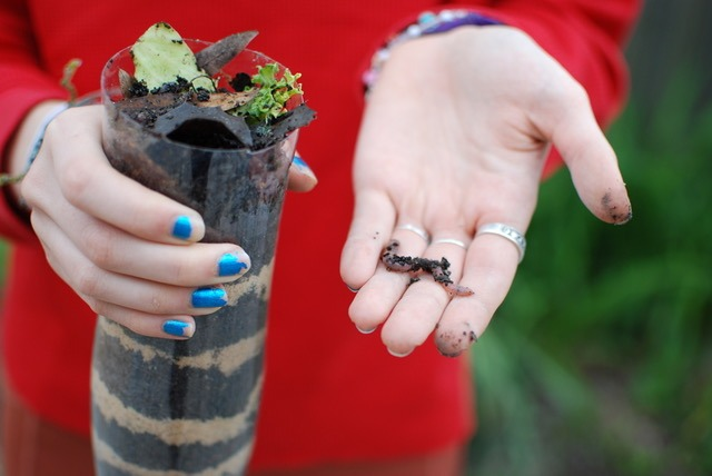 Watching worms work in a wormery is educational and fun. . Image by Mitra Bryant