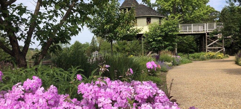 native plantings like smooth phlox, in pink, can help the ecosystem