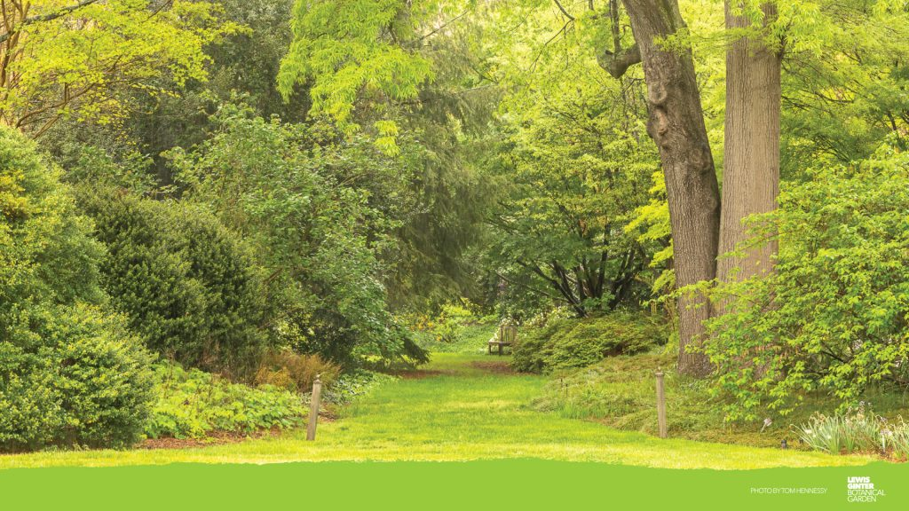 Flagler Garden Zoom background, image by Tom Hennessy
