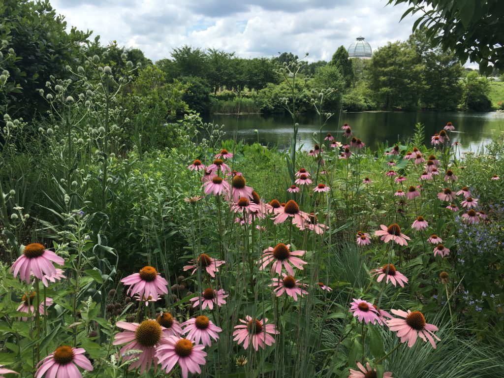 Landscaping in Layers with echinacea and other native plants