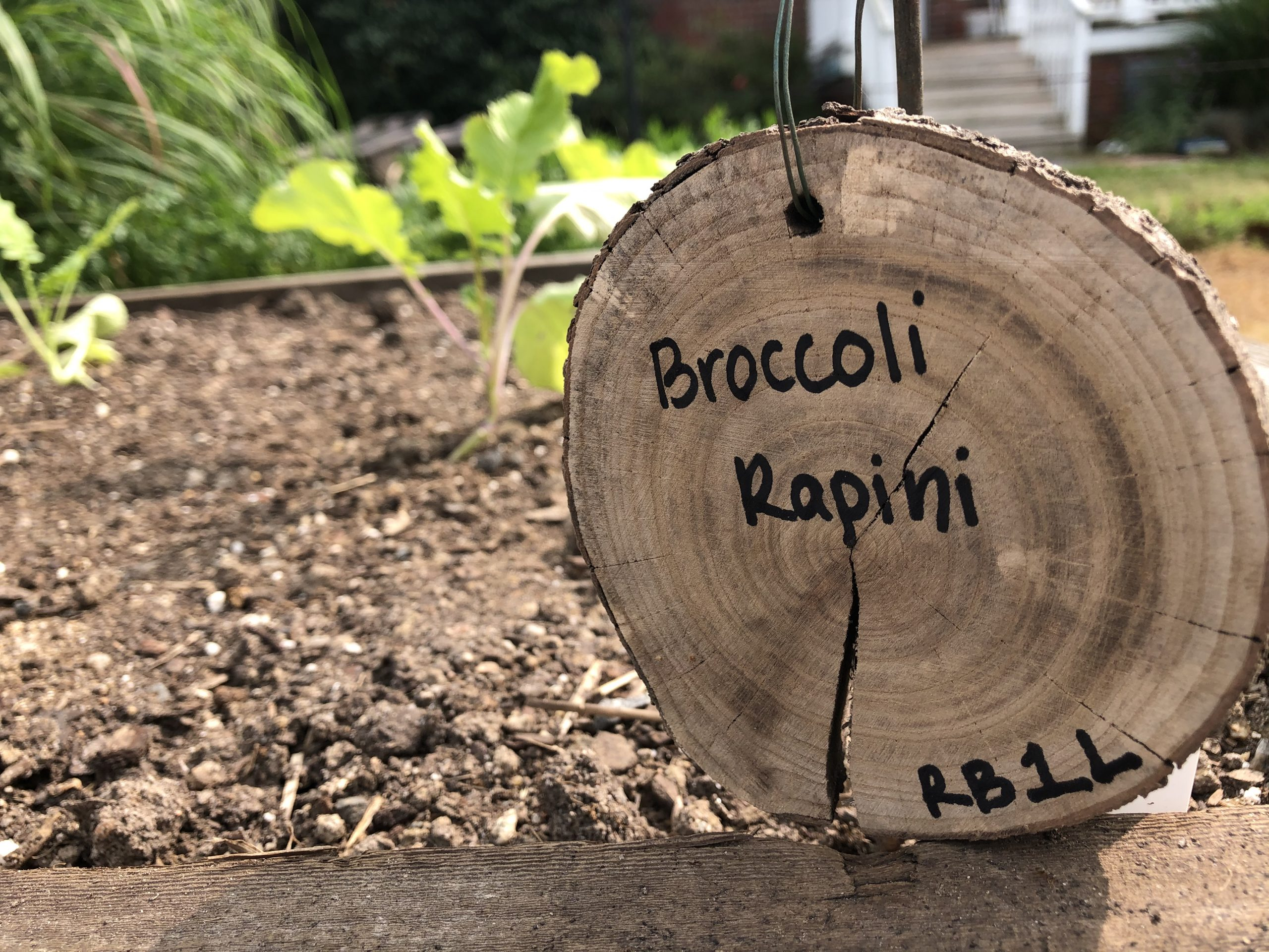 Sign showing broccoli growing in a garden