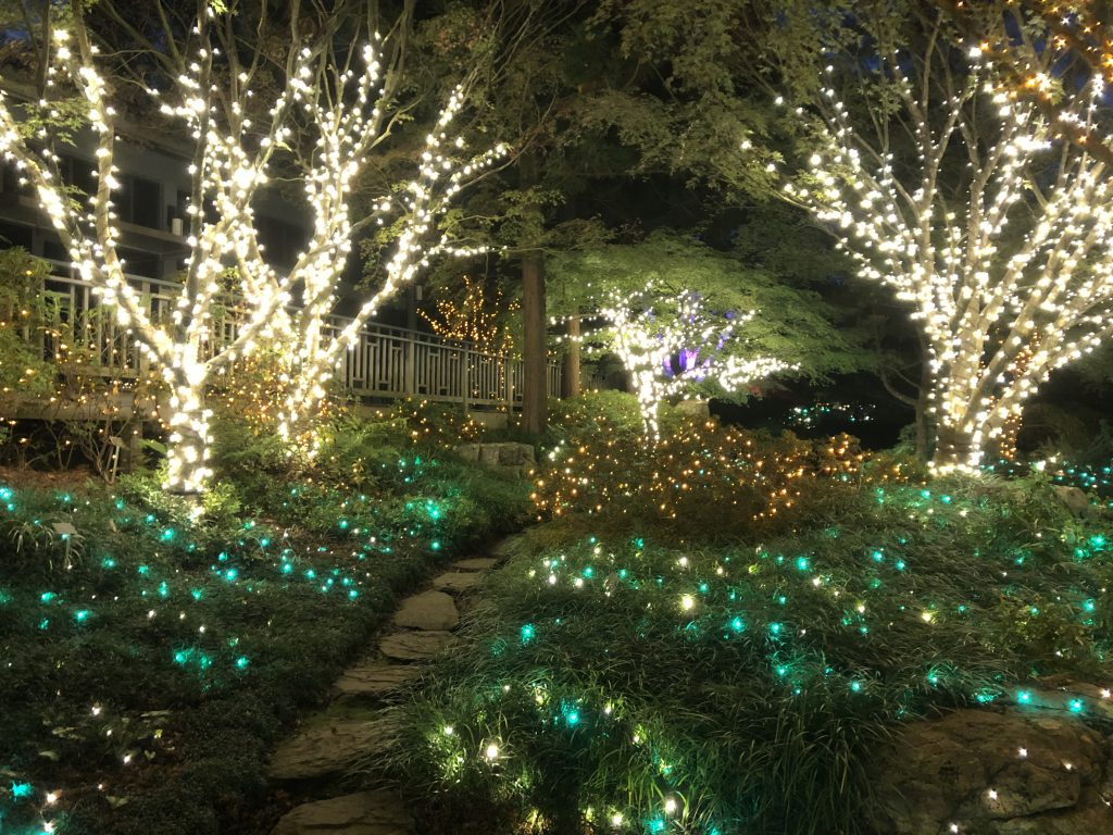 trees wrapped in lights at Dominion Energy GardenFest of Lights