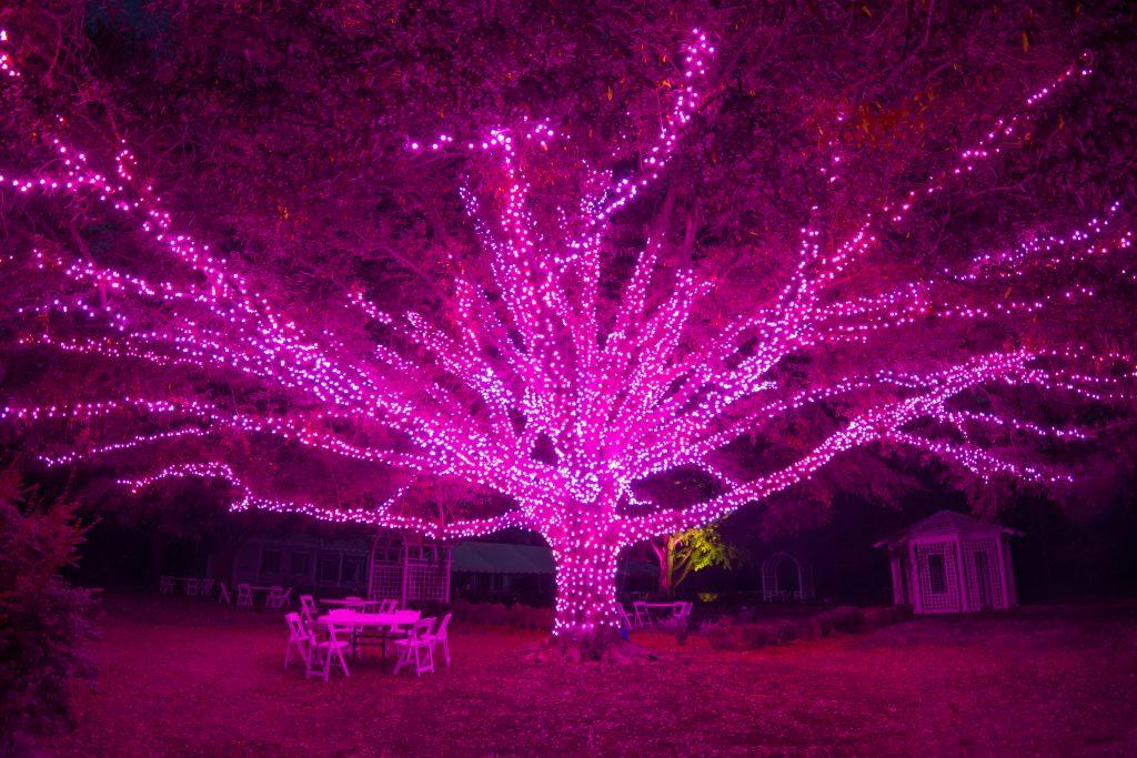 Darlington Oak at Dominion Energy GardenFest of Lights. Image by Nicole Plummer