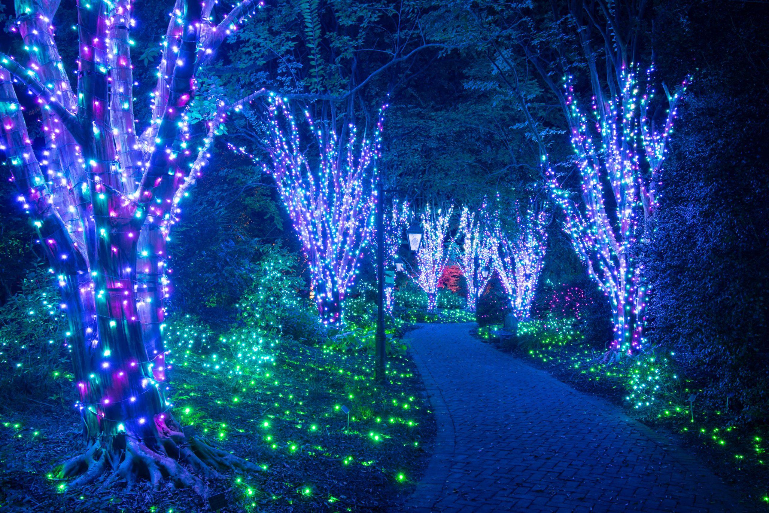 Holiday lights on crape myrtles in the Flagler Garden