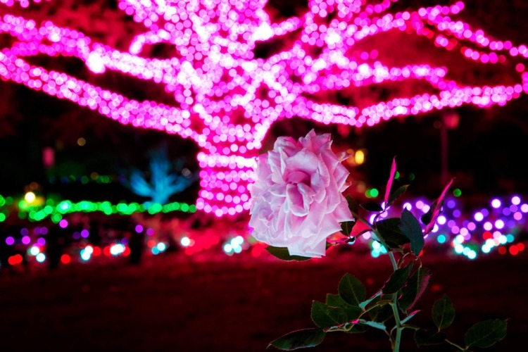Dominion Energy GardenFest of Lights. Image by James Loving