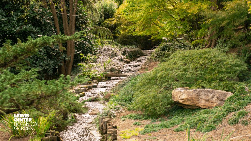 Garden Zoom Background. Image by Nicole Plummer