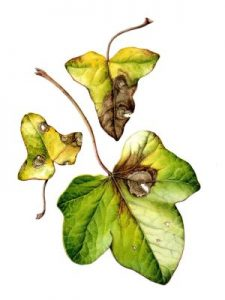 Bringing Leaves to Life with Julia Trickey